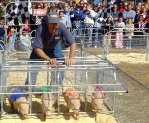 Piggate2web